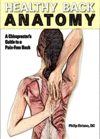Healthy-Back-Anatomy